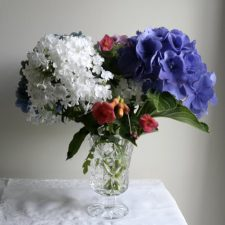 Late Summer Blooms of Hydrangea, Phlox, Trumpet Vine and Morning Glories