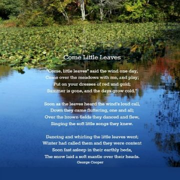 Come Little Leaves