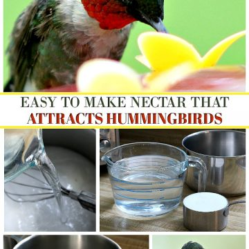 Make Your Own Hummingbird Nectar
