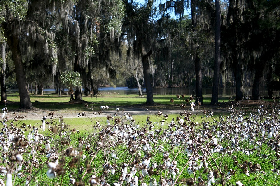 Boone Hall Plantation Charleston South Carolina