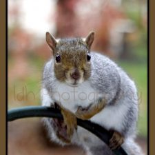 Pesky Persistence of a Squirrel at the Bird Feeder