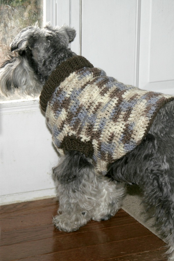 Keeping my miniature schnauzer puppy warm and cozy with a crocheted dog sweater. Make one for your pet in your favorite color with this how-to pattern.