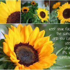 Mosaic Monday ~ Sunflowers…