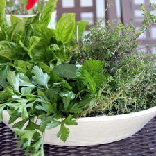 Harvesting and Storing Herbs