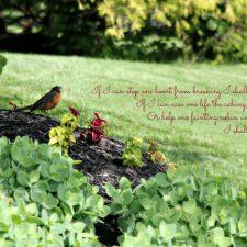 robin in the garden