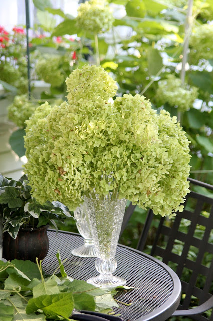 Hydrangea flowers fade into lovely, muted colors. Showing how I dry hydrangea blossoms to use in arrangements to enjoy through the winter.