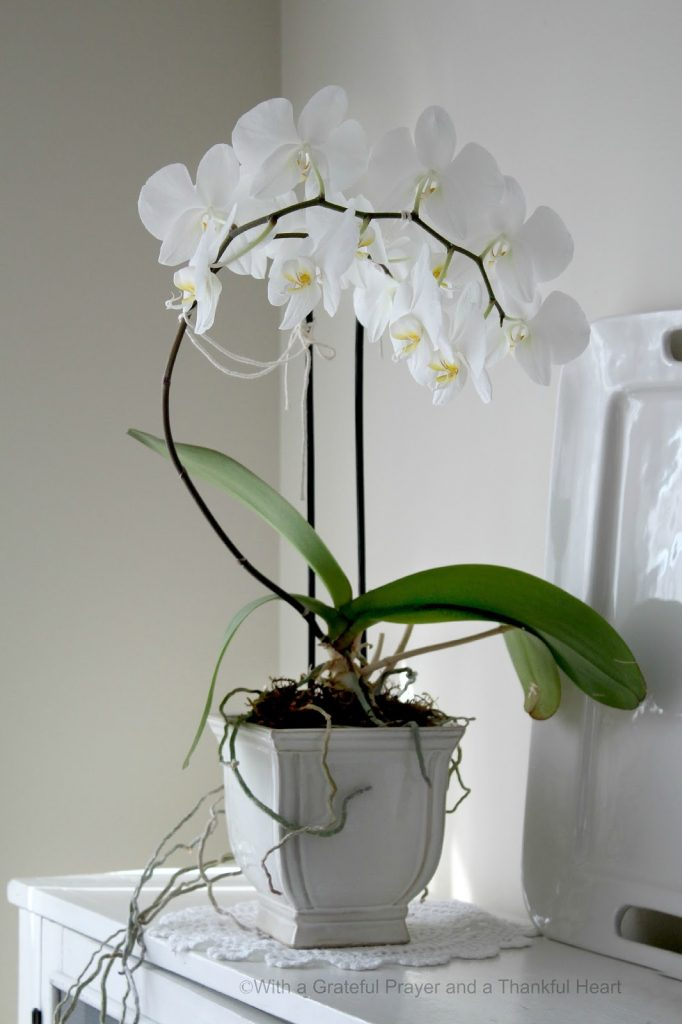 Orchids In Bloom Grateful Prayer Thankful Heart