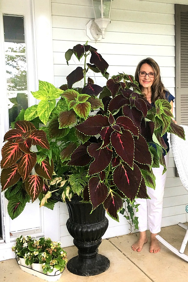 A garage sale urn was a DIY project. A little work and a new coat of paint resulted in a beautiful, farmhouse style porch planter for spring garden flowers with lots of curb appeal. Shade loving annuals flowers and coleus do exceptionally well.