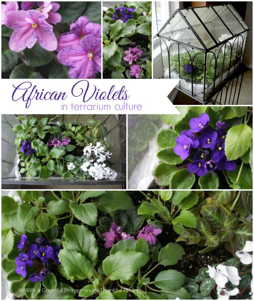Fill your home with favorite Houseplants tha are easy to grow include African Violet, Streptocarpus, Hoya, Pothos and Orchids.