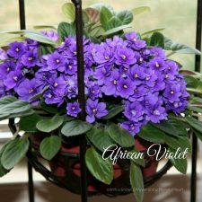 My Favorite 5 Guest Post~ Houseplants