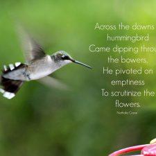 Hummingbirds and feeders