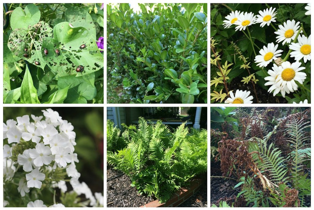 How Does Your Garden Grow collection of problem garden flowers