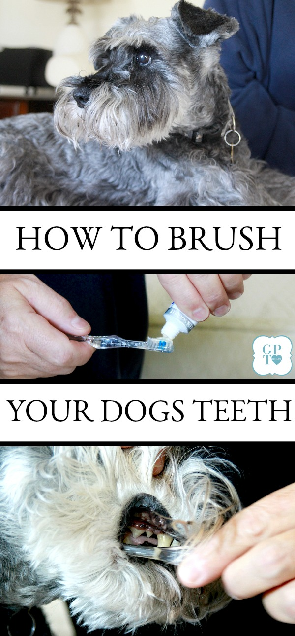 After two costly dental cleanings at the veterinarian, I learned to clean my dog's teeth. Much easier than I thought.