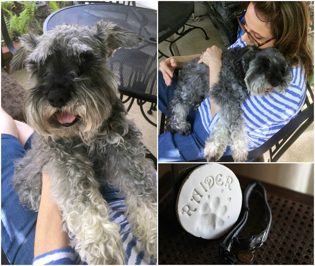 A visit to the vet to see why our miniature schnauzer dog was frequently falling, revealed a diagnosis of Sick Sinus Syndrome, a disease of the heart that eventually took his life.