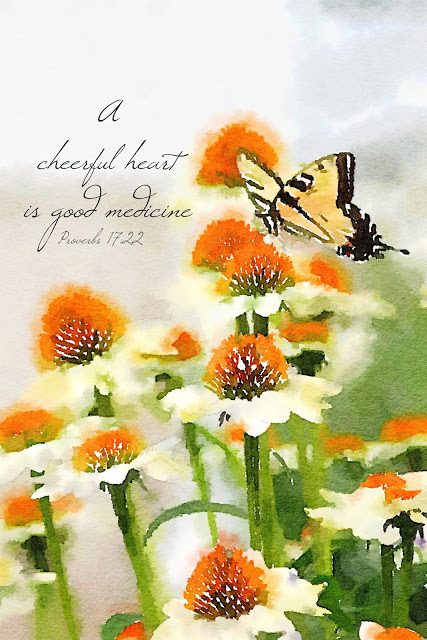 Graceful butterflies. A lovely swallowtail butterfly landed on a cone flower in my garden and it brought to mind a bible verse from Proverbs.