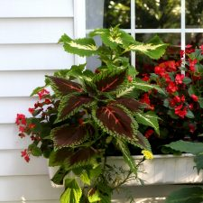 Early Autumn Garden Chores