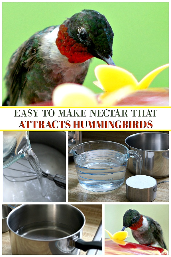 How to make your own hummingbird nectar with this easy recipe that attracts these fascinating, tiny birds who can fly at speeds greater than 33 miles per hour and flap their wings 720 to 5400 times per minute when hovering. Easy how to for cleaning feeders.