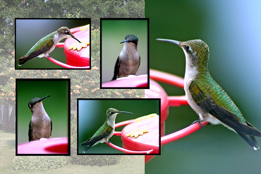 Easy recipe for nectar to attract hummingbirds to the feeder