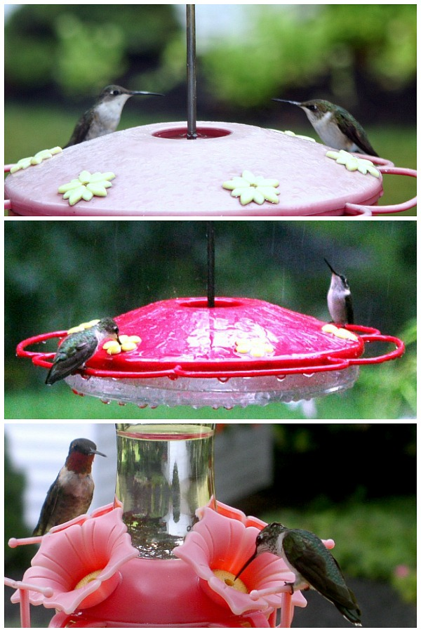 Make Your Own Hummingbird Nectar | Grateful Prayer | Thankful Heart