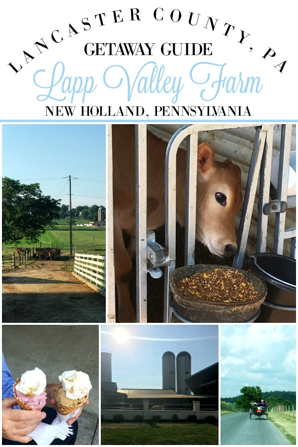 Lapp Valley Farm is a must visit when in the Pennsylvania Dutch area. Meticulously kept Mennonite farm in New Holland, Lancaster County with scenic grounds and rich, homemade ice cream. View the Jersey cows, pet the calves and meander around this lovely farm.