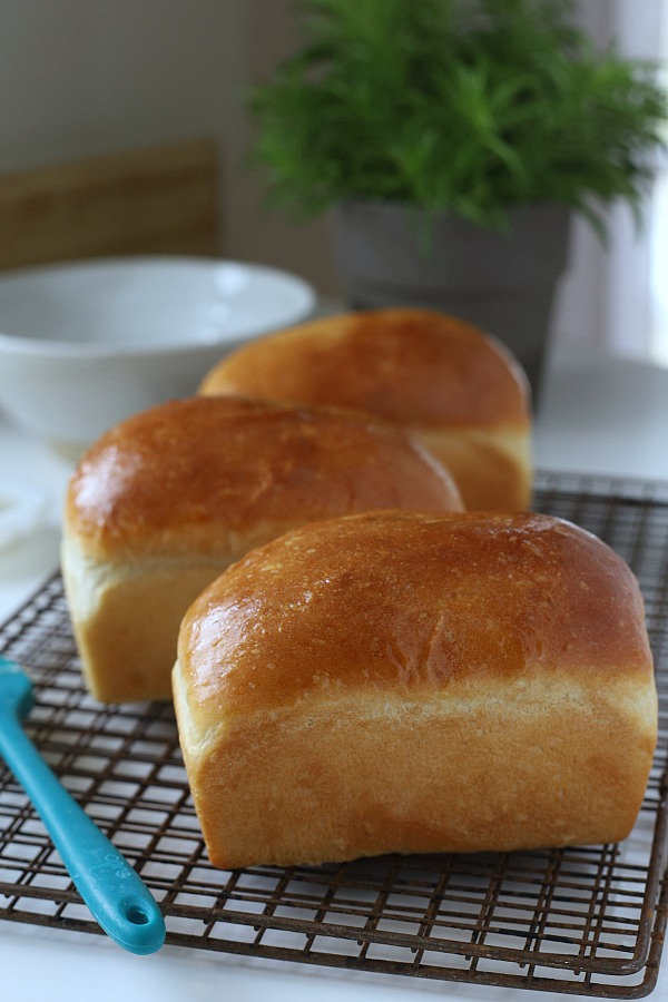 Toasted, buttered, as a sandwich or for sopping up gravy or soup, homemade bread is amazingly satisfying. This very easy potato bread works for breakfast, lunch and dinner.