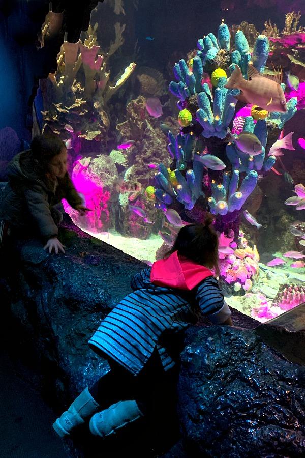 Camden Aquarium with grandchildren
