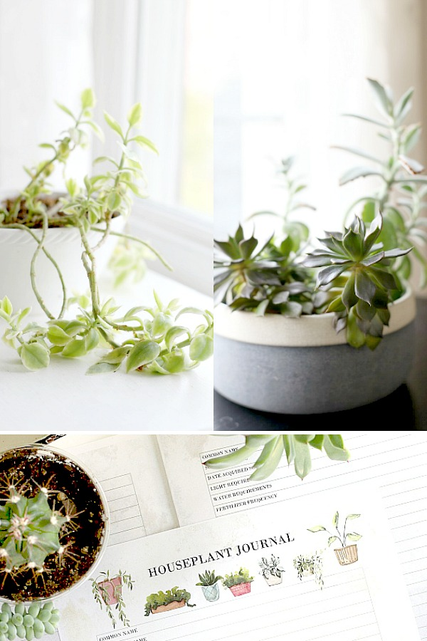 Growing houseplants is more than a hobby. It provides relaxation, a sense of accomplishment and a lovely way to decorate your work or living space. Keep plants healthy and thriving by keeping notes about light, water fertilizing and other requirements for each plant in this free printable download houseplant journal.