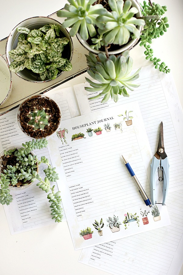 Keep your indoor plants healthy and thriving. Record and track light, watering, fertilizing and care requirements in this free houseplant journal download. Great for beginners to record purchase date, re-potting, blooming and all important notes.