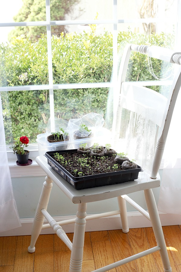 Growing houseplants is more than a hobby. It provides relaxation, a sense of accomplishment and a lovely way to decorate your work or living space. Whether starting seeds on a windowsill or nurturing small plants, keep them healthy and thriving by keeping notes about light, water fertilizing and other requirements for each plant in this free printable download houseplant journal.