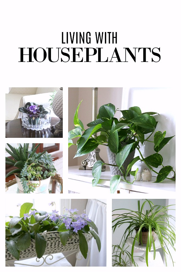 Living with houseplants carries many benefits. It can relieve stress as well as produce joy and accomplishment as they flourish and grow. Filling your home with plants creates a warm and inviting environment. Many require little care, low-light conditions and are easy even for the beginner.