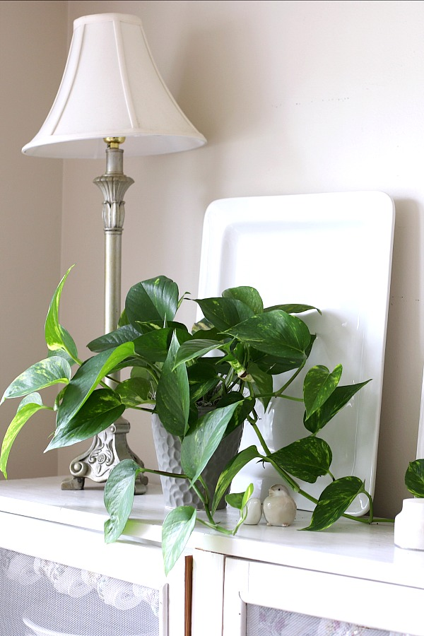 Caring for indoor houseplants is not just a rewarding hobby but adds much appeal in decor when displayed in the home, creating a welcoming environment.