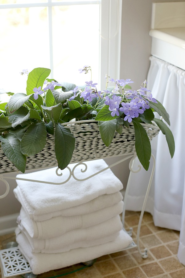 There is just something very rewarding about caring for indoor houseplants. It is exciting to see them flourish and they add much appeal in home décor when displayed, creating a warm and welcoming area.