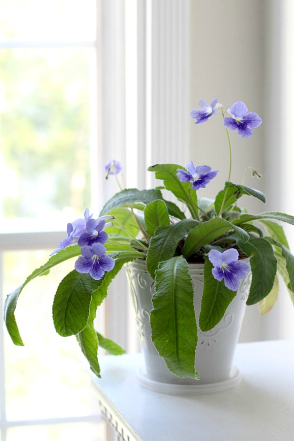 Many indoor houseplants have low-light and easy care requirements. They add much appeal in décor when displayed in the home and create a welcoming environment.