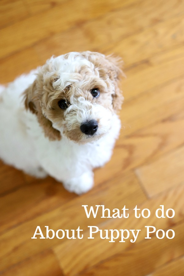 A simple recipe of chicken and rice when puppy has tummy troubles is recommended by veterinarians to help dogs recover from diarrhea and/or vomiting.