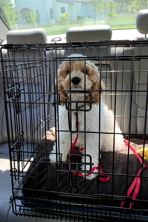 Puppy crate for sleeping and traveling in the car for our cockapoo puppy.