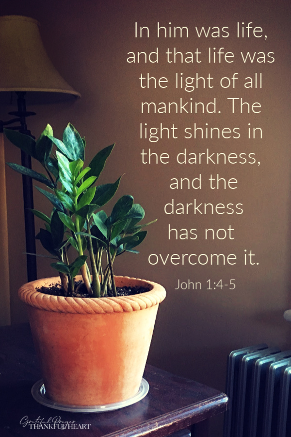 Growth in the new year - In him was life, and that life was the light of all mankind. The light shines in the darkness, and the darkness has not overcome it. John 1:4-5