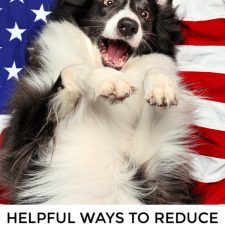 Calm your Dog during Fireworks