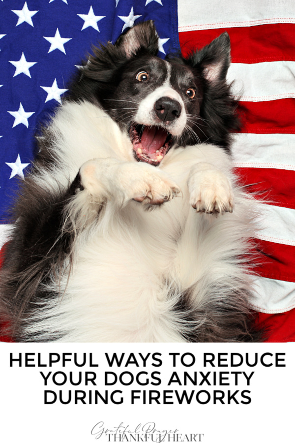 Fireworks can cause fear, anxiety and even traumatize a dog. Helpful safety tips to calm him down when he is afraid or scared during 4th of July displays.