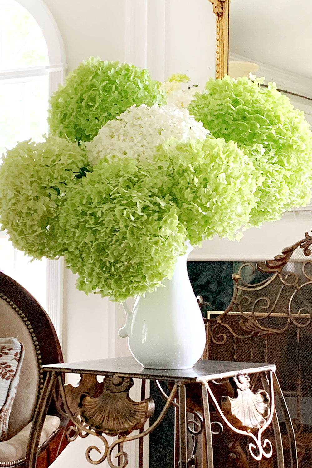 Giant white chartreuse green snowball hydrangea flowers broken after the rain storm